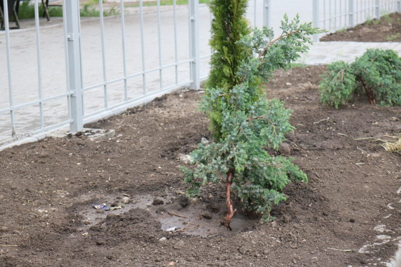 Часть растений полита