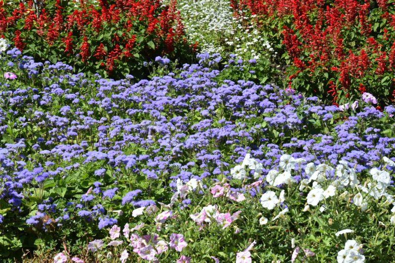 В Запорожском ботаническом саду