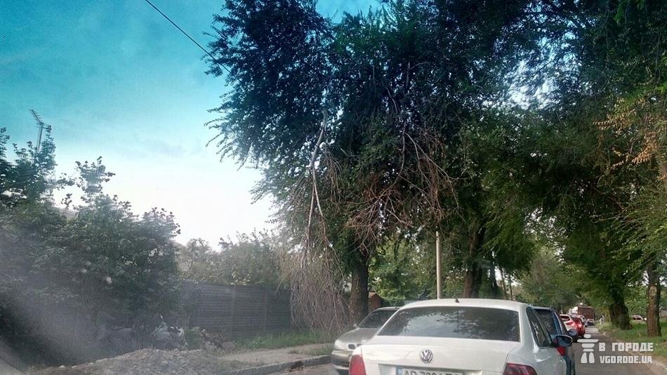 Машины стоят на улице Каховской и над ними висят сухие ветки, которые могут упасть. фото: Vgorode