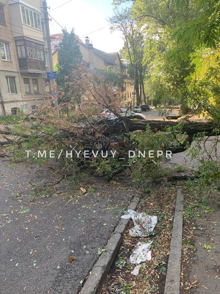 Из-за ветра падают деревья на авто / источник фото