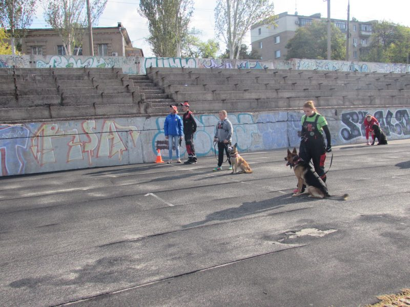 собаки на старте