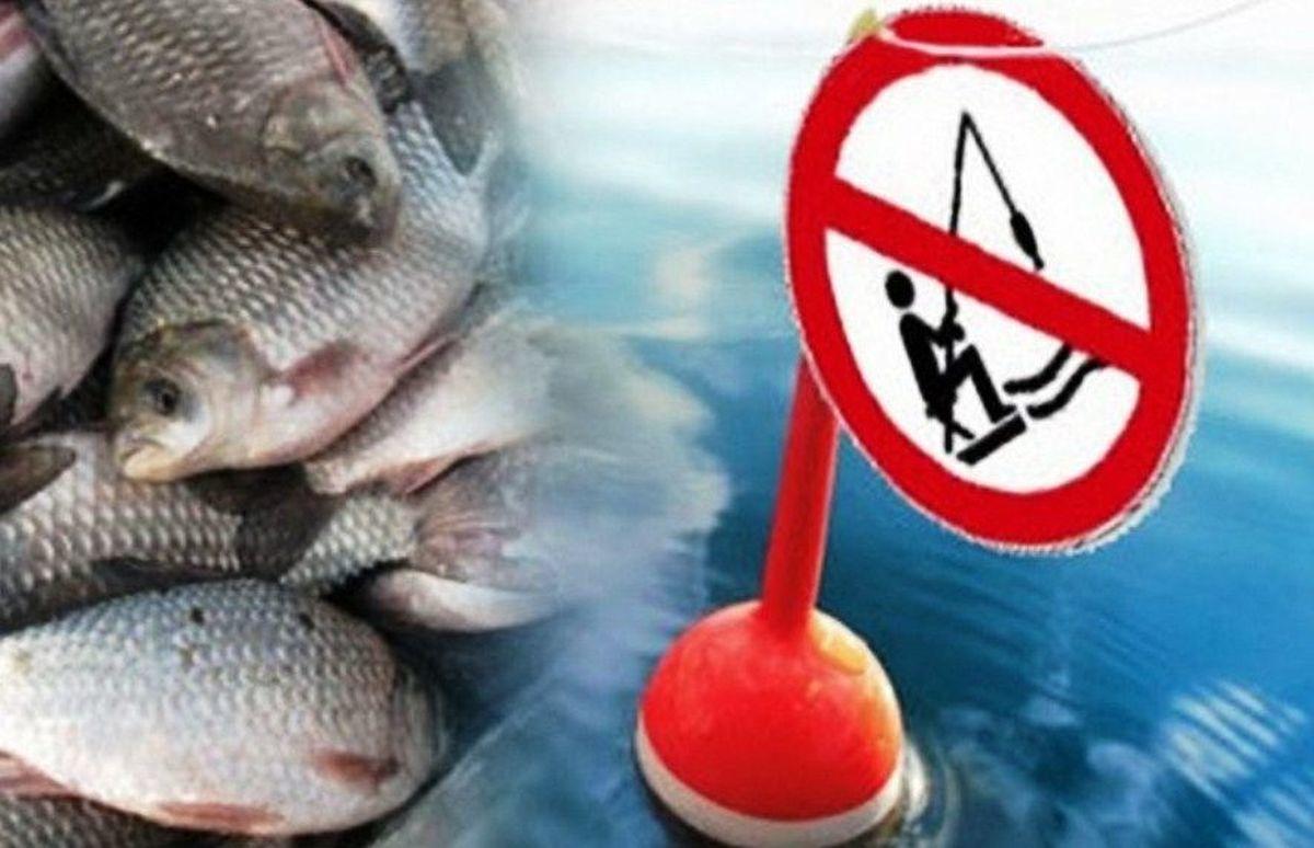 Попасться на крючок: где и как нельзя ловить рыбу и какая рыбалка незаконна