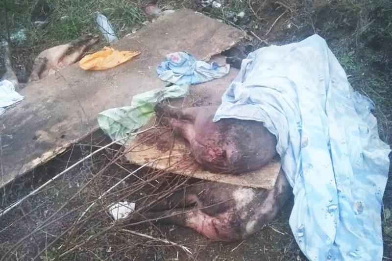 В Гуляйполе прямо на улице выбросили трупы семи свиней