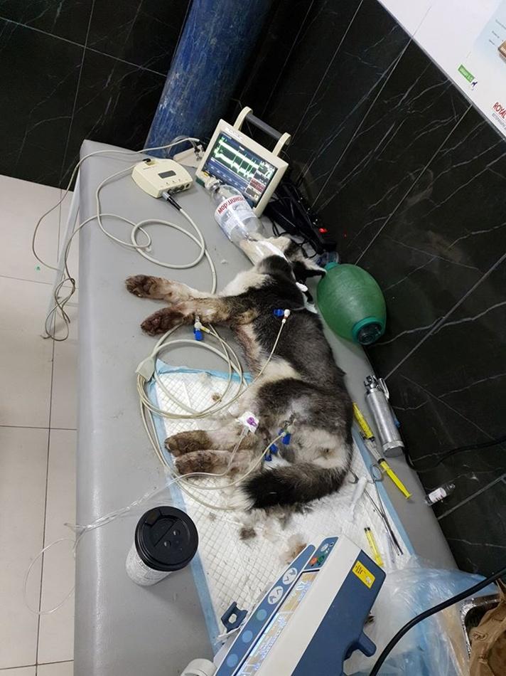 Малышку Фаби, которую повесили прошлой ночью, так и не удалось спасти. Фото: fb Дарья Стешенко