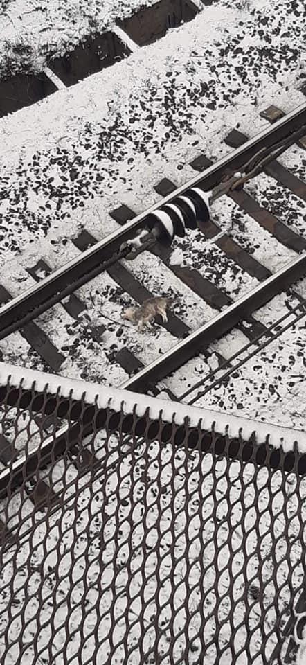 В районе площади Поляка с моста сбросили собаку