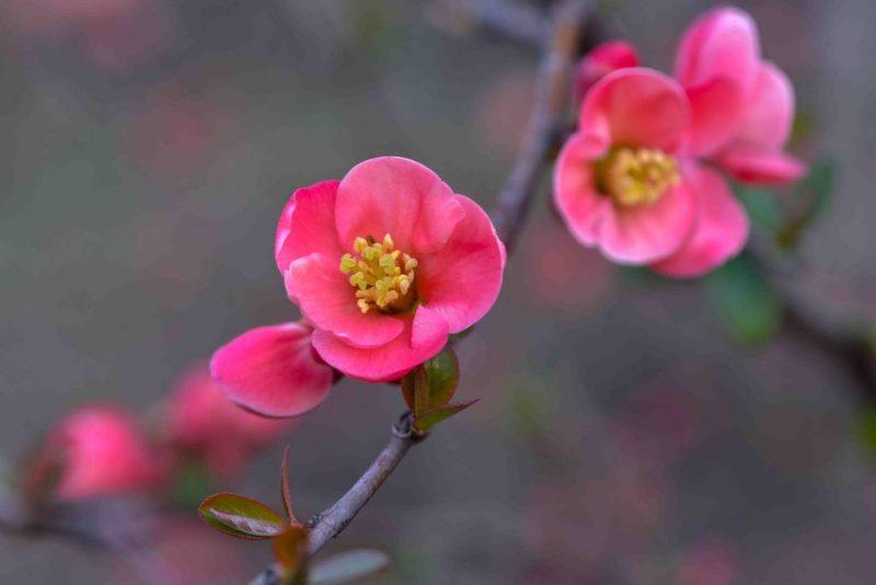 Запорожье в цветах: наслаждаться красотой можно, не выходя из дома - фото