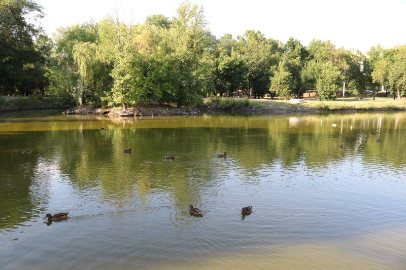 В пруду центрального парка Запорожья поселились выдры- фото