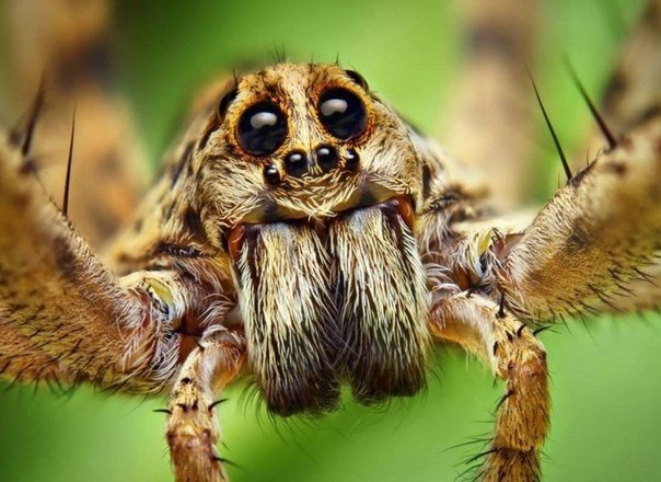 Незваный гость: в запорожском супермаркете по торговому залу ползал большой паук (ВИДЕО)