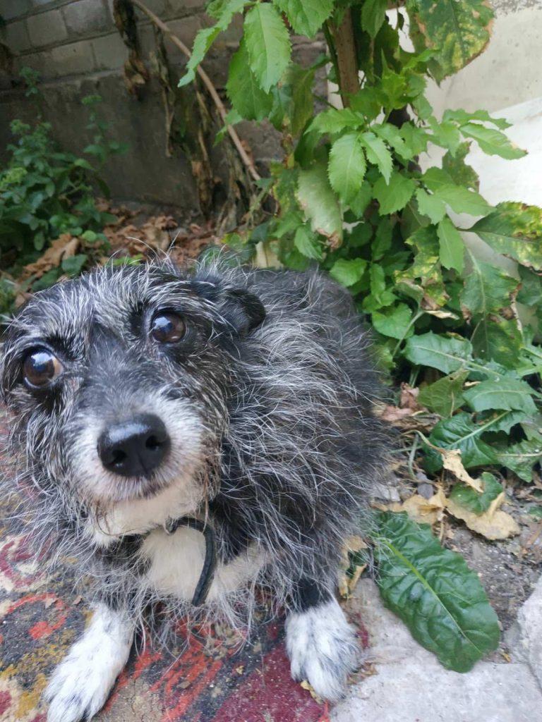 Собачка, которую вернули в запорожский приют через восемь лет, - отправится жить в Италию