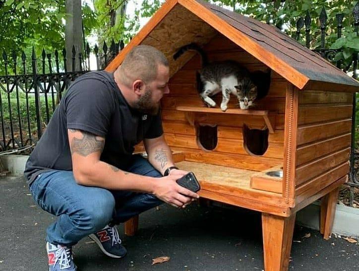 коттедж для котов