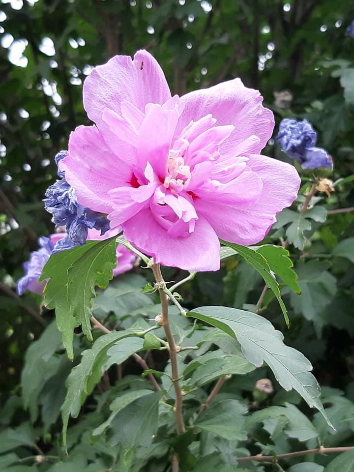 В запорожском ботсаду буйство цветов