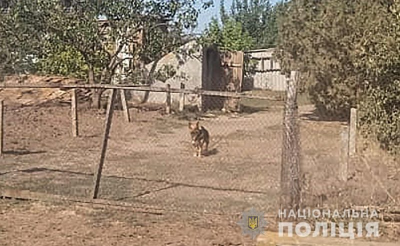мужчина спустил собаку на полицейских