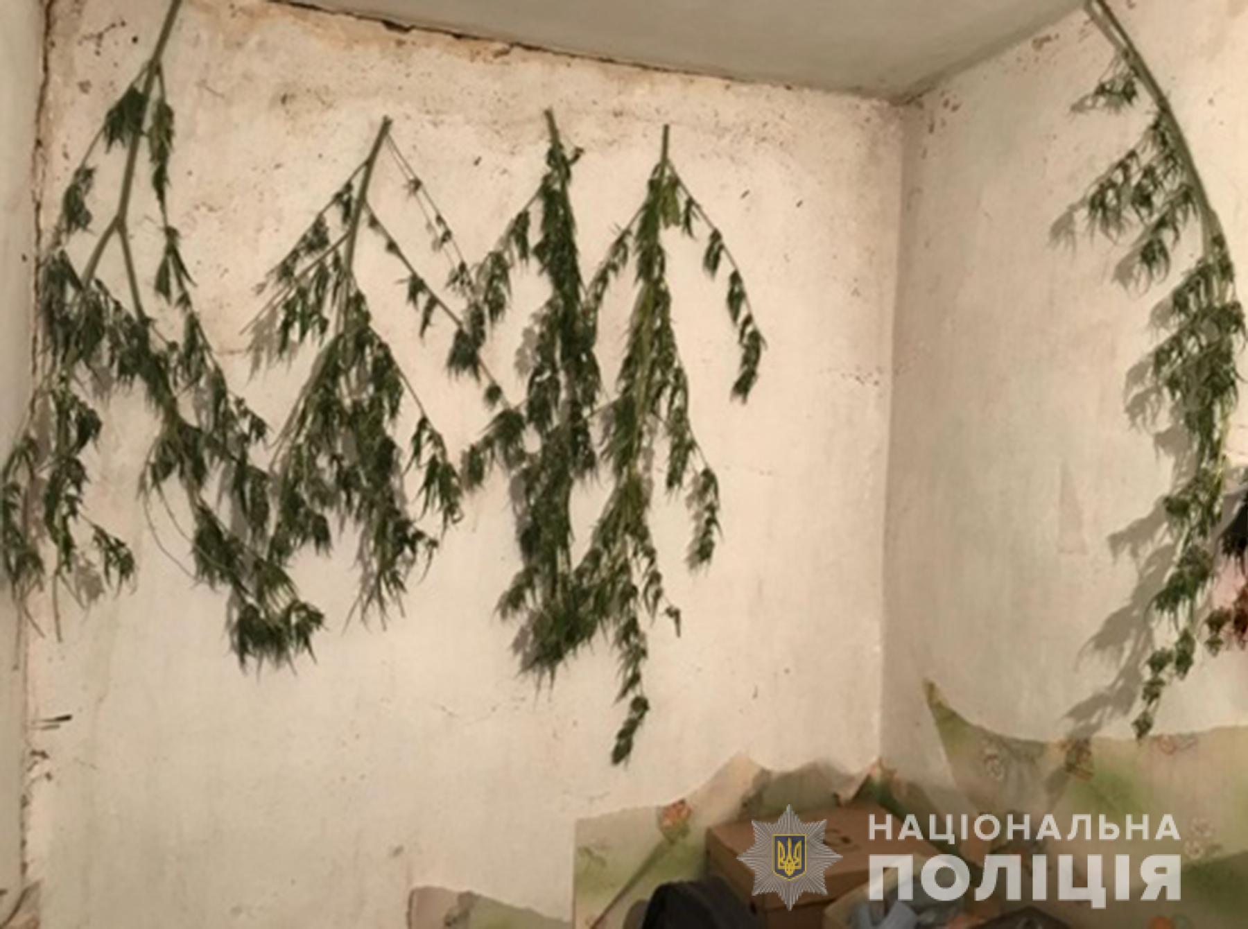 """Житель Запорожья вырастил и засушил """"незаконный"""" гербарий (ФОТО)"""