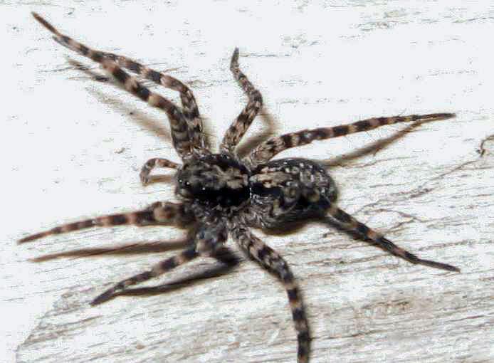 В Запорожье активизировались опасные пауки: есть пострадавшие (ФОТО)