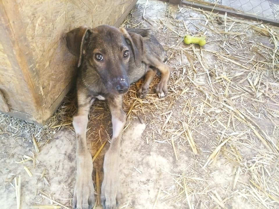 В Запорожье неизвестные выбросили на свалку щенков: волонтеры просят о помощи (ФОТО)