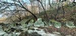Лесной массив на Лысой горе