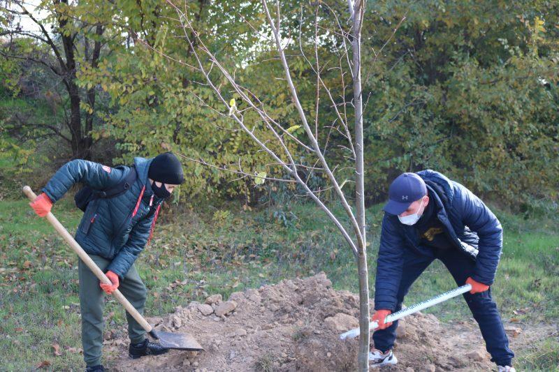 Учасники екологічної акції висадили у Запоріжжі липи та дуби
