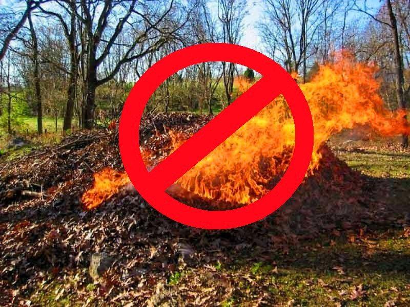 При сжигании листьев в атмосферу выделяются вредные вещества