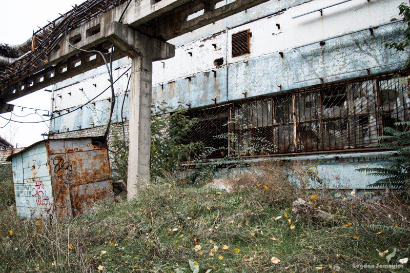 В Запорожье старый ангар для стройматериалов зарос бурьяном и деревьями - фото