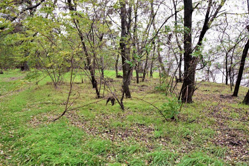 жители города по выходным ходят в лес с большими мешками