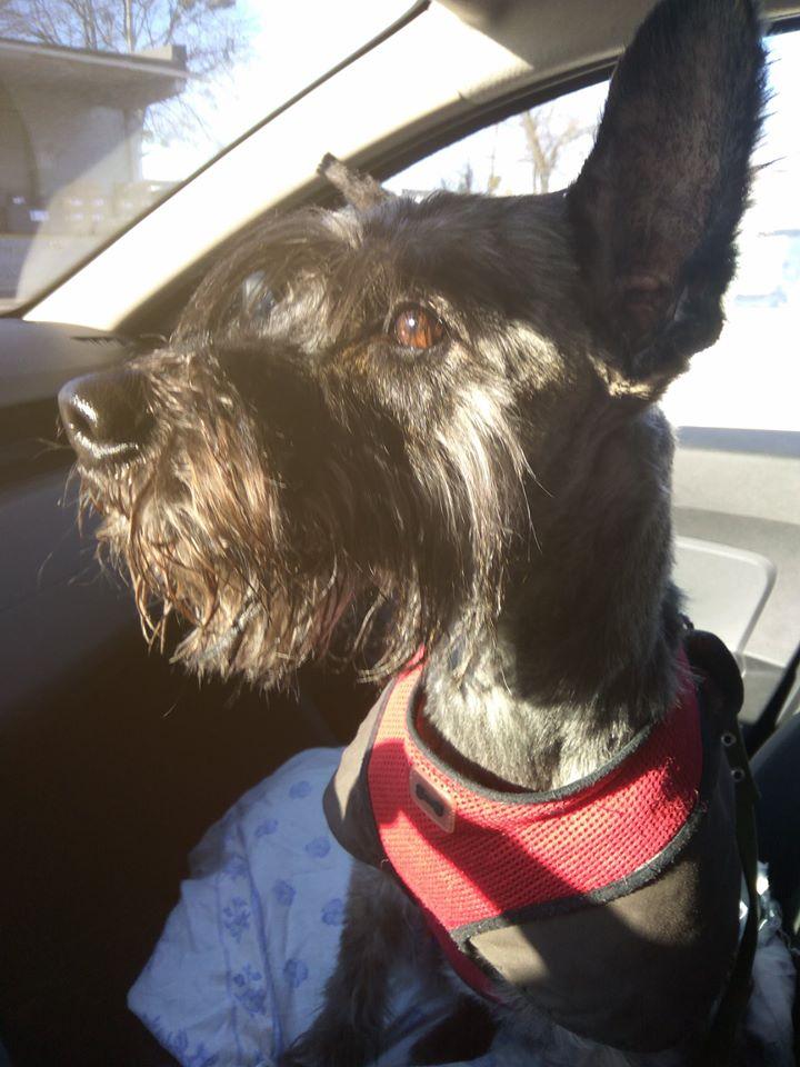 собака Баффи в Америке