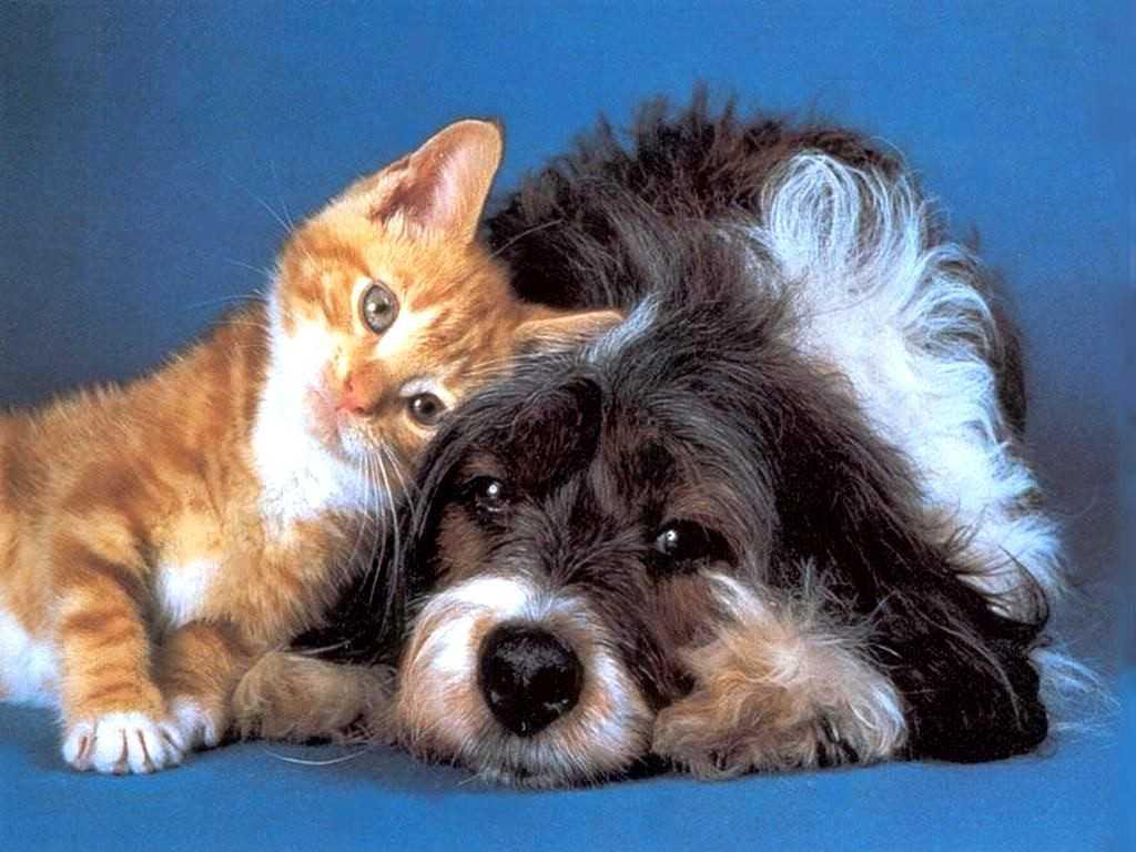Животные погибают за полчаса: в центре Запорожья рассыпали отраву для собак (ФОТО)