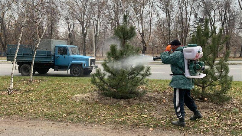 Спасают елки опрыскиванием