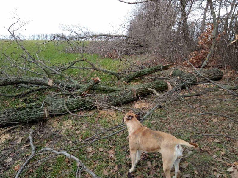 В Запорожской области неизвестные срубили 50 молодых дубов