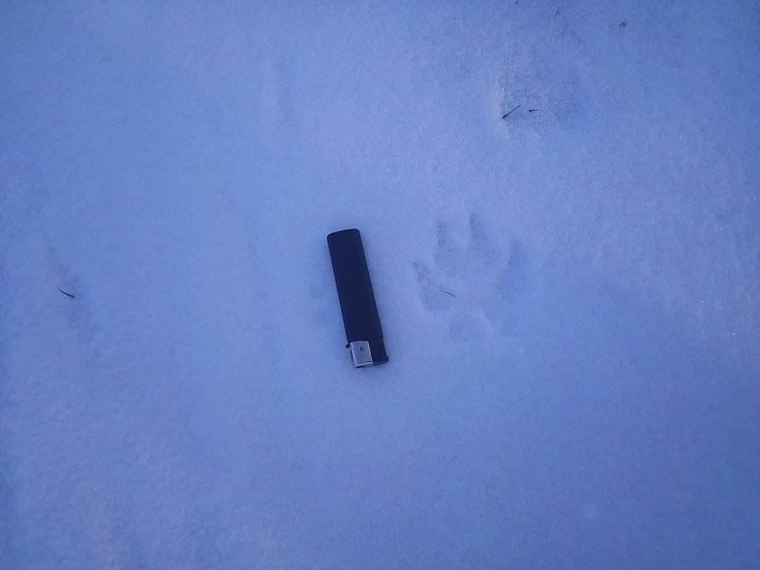 В Запорожской области появилась новая жертва неизвестного хищника (ФОТО)