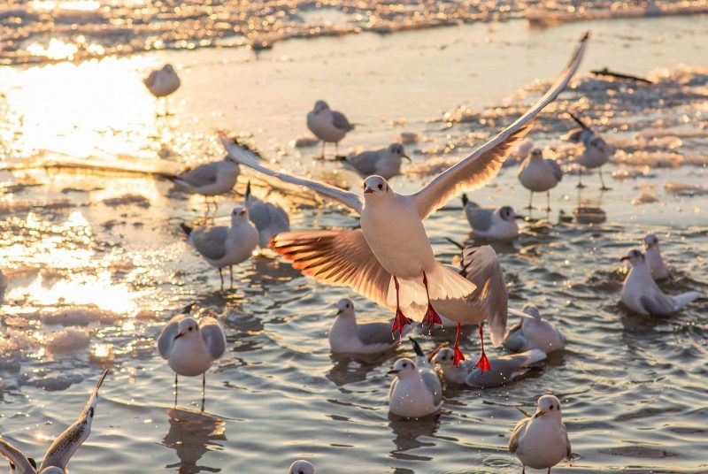 чайки на море