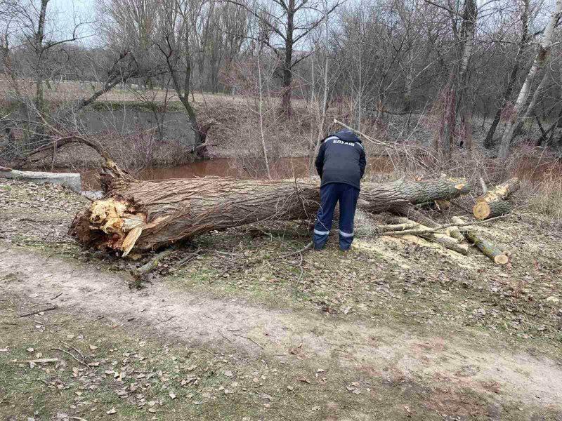 Возле парка Победы на мосту упало дерево