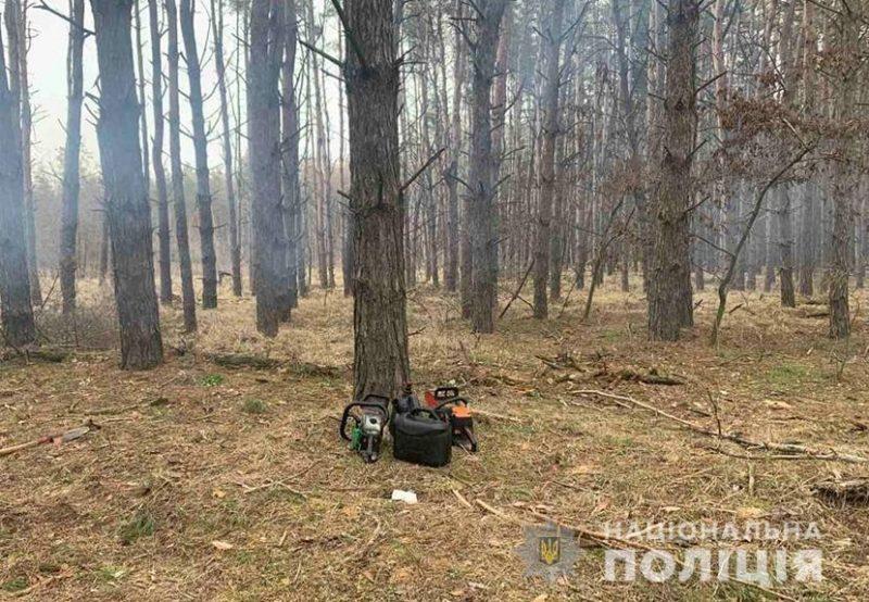 В Запорожской области лесные браконьеры рубили сосны - фото