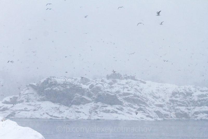 Запорожские пингвины: на скалах Хортицы зимуют удивительные птицы (ФОТО)