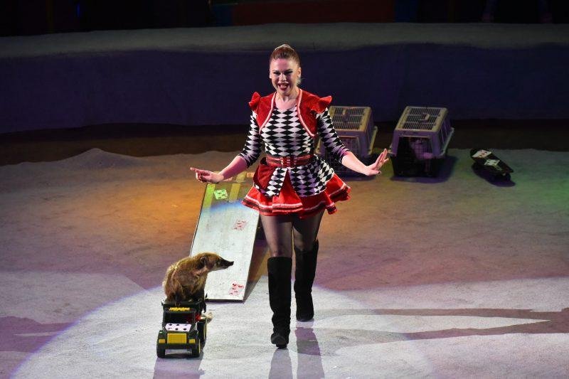 Акробаты, жонглеры и животные: в запорожском цирке состоялась премьера нового шоу