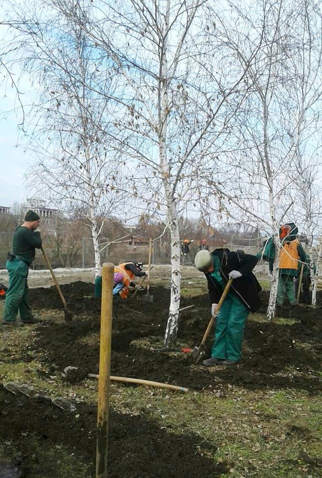 На площади Запорожской к пересаживанию готовят березы