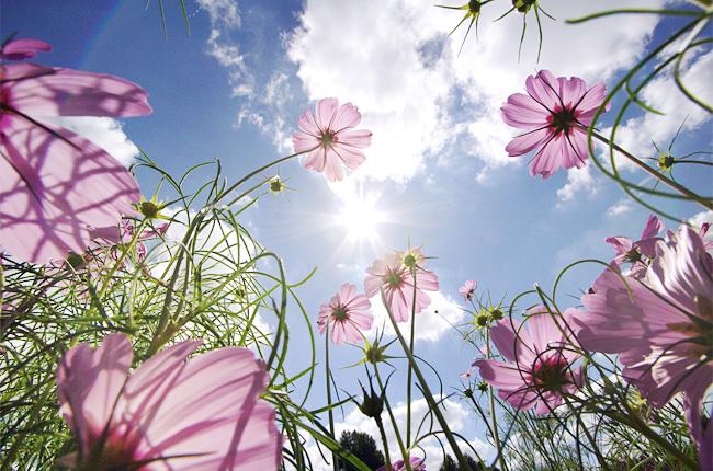 Синоптик рассказала, когда в Запорожье начнется настоящая весна