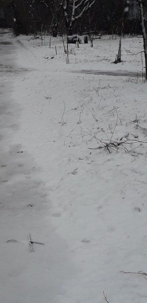 снег во дворах
