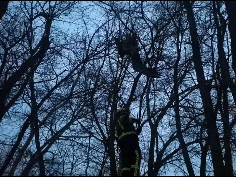 В Запорожье из веток дерева не мог выпутаться орлан