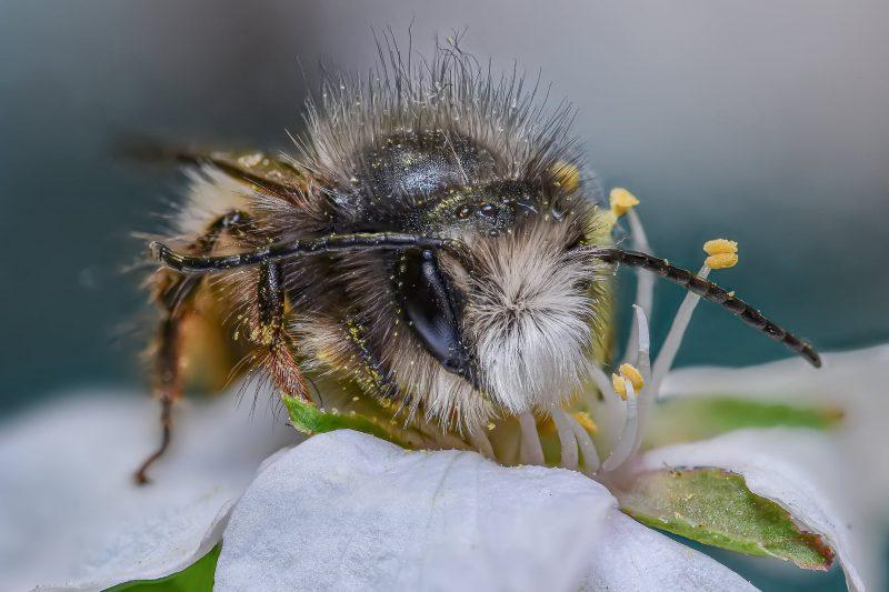 Божьи коровки и пчелы - фотограф показал самых маленьких обитателей Запорожья
