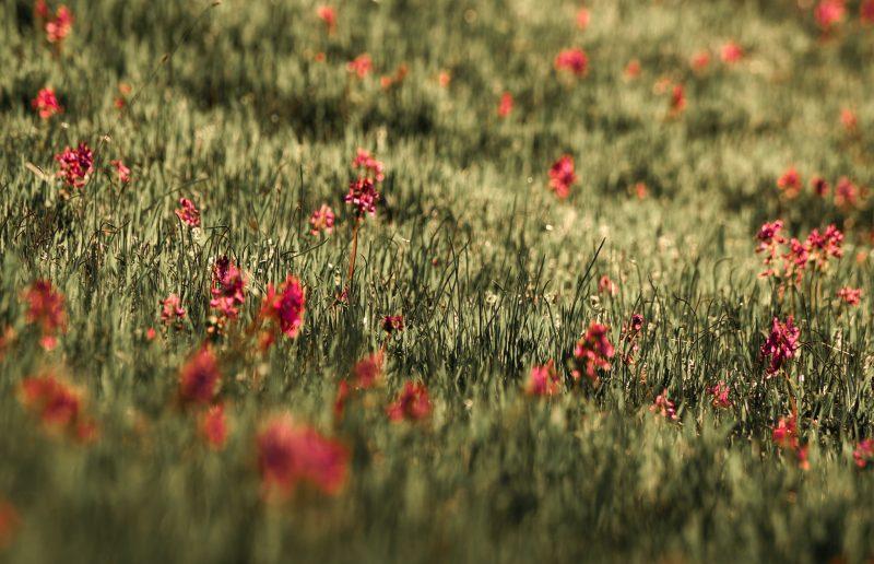 Цветы на Хортице поражают своей красотой - фото
