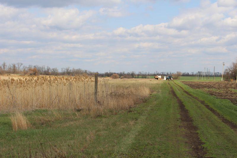 Как в Запорожской области выглядит село, основанное на бывших землях меннонитов