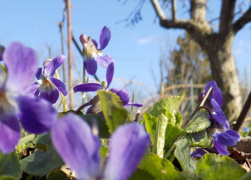 Жительница Запорожской области показала, какие удивительные цветы расцвели в ее саду- фото