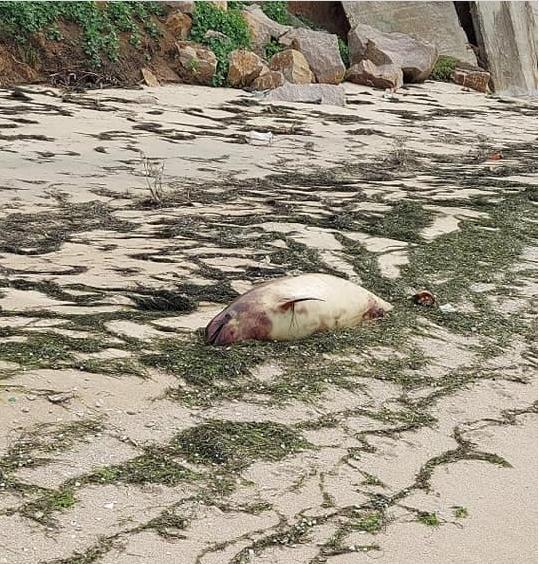 На побережье Азовского моря волны массово вымывают мертвых дельфинов (ФОТО)