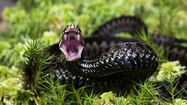 В Энергодаре ребенок оказался в реанимации после укуса змеи: подробности (ВИДЕО)