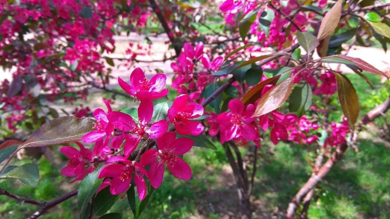 В Запорожье зацвело декоративное растение, которое завораживает своей красотой - фото