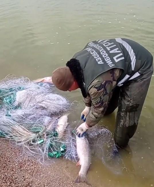 В Запорожской области в Молочном лимане браконьеры бросили сети сети с дорогим уловом