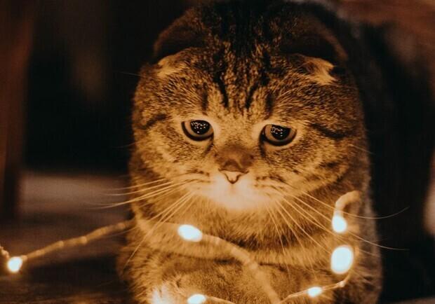 Кому в Запорожье отключат свет 14-го июня. Фото: Pinterest