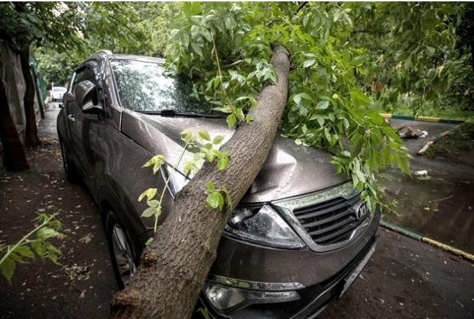 В Запорожье на иномарку рухнуло раскидистое дерево (ВИДЕО)