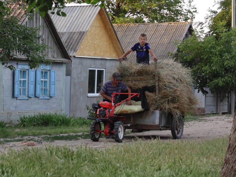 дожди помогают расти траве и мешают заготовке сена