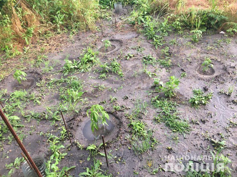 В Мелитополе хозяева перед домом устроили плантации конопли и мака